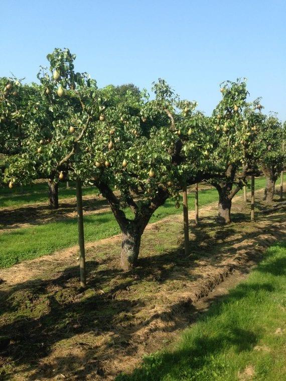 boomkwekerij-nederland