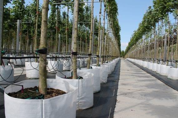 boomkwekerij-opheusden